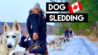 What DOG SLEDDING is REALLY like | Siberian Huskies | Toronto Canada