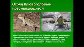 Пресмыкающиеся рептилии