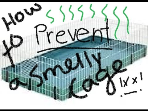 How To Prevent a Smelly Guinea Pig Cage