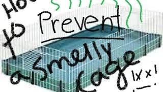 How To Prevent a Smelly Guinea Pig Cage