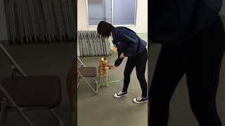 動物専門学校 トリマー 動物看護師 アクアリウム 動物のお仕事 動物系学科1年生のクリッカートレーニング⑤ thumbnail
