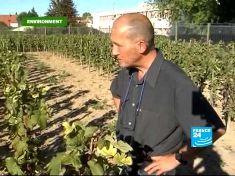 FRANCE 24 Environment - A glass of red, white or green?