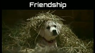 Meri Zindagi Sawaari - Animal Friendship Video Song By Official Arun Jonwal