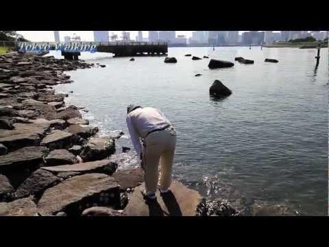 Fishing for Gobies in Tokyo (Odaiba Kaihin Park) ハゼ釣り名人(お台場海浜公園)