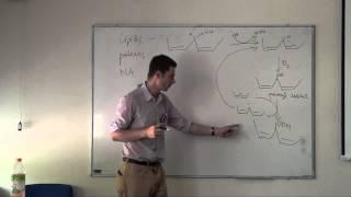 Free radicals and antioxidants (HD)