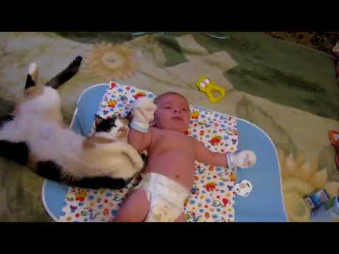 Cat: don't cry my baby!