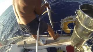 Ocean Fishing on sailboat. Океанская рыбалка у берегов Кубы!