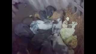 разведение кроликов в яме(разведение кроликов в яме., 2012-11-14T15:55:28.000Z)
