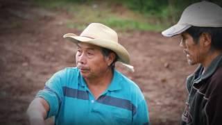 Combate frontal a la tala ilegal y al cambio de uso de suelo