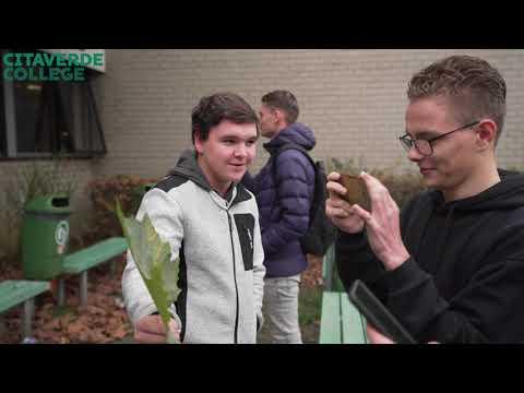 CITAVERDE Roermond: meer over het vak Groen voor de Hoveniersopleiding!