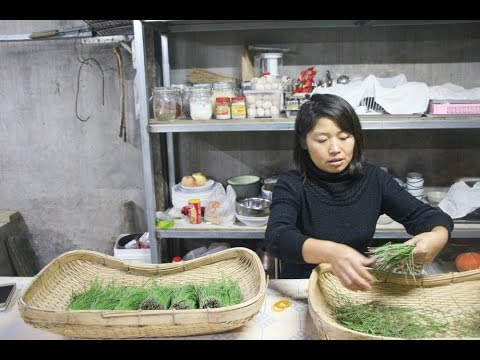 Back to the Land--The Organic Movement in China