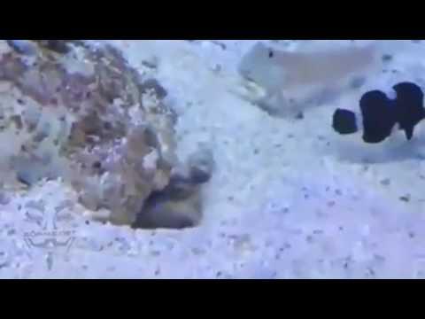 Sönmez Reyiz Balık Montaj Komik HD