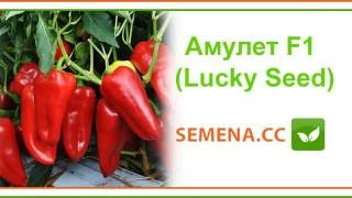 Амулет F1 перец (Lucky Seed) Культура в поле