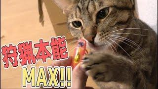猫の狩猟本能を呼び覚ますおもちゃが想像以上だったwww thumbnail