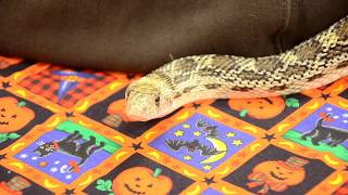 Creatures of the Night at ZooAmerica in Hershey