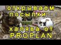 Распаковка посылок для животных по промоакции с подарком от Proplan