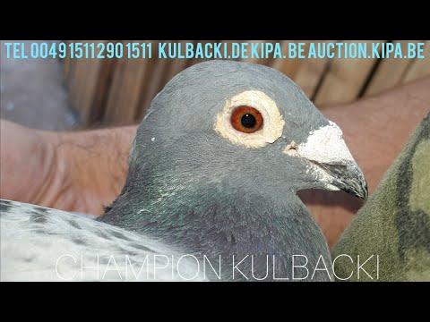 ©live Janssen 3573 , Klamper x Lichte original Janssen Kulbacki Racing Pigeons Loft, Champion Team
