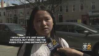 NYPD Searching For Brooklyn Hit-And-Run Driver