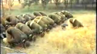 Pakistan Army Song - Qasam Us Waqt Ki by Junaid Jamshed