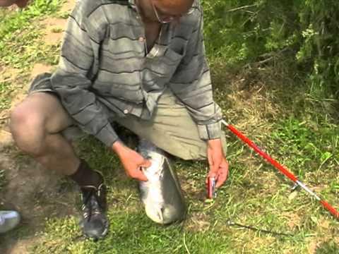 искра платная рыбалка