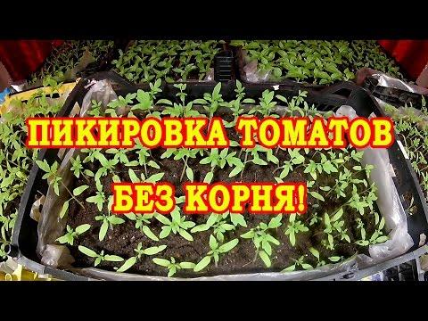 Перец черный горошек выращивание из семян