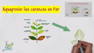 🍃 Aquaponie: Les carences en fer