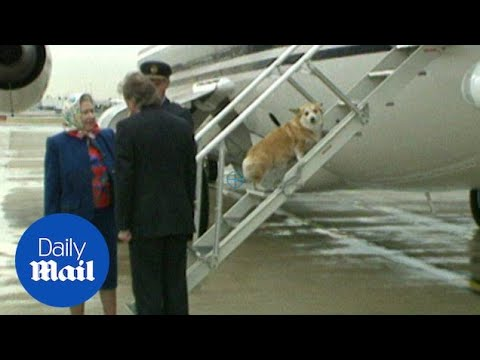 Queen encourages corgis up aircraft steps at Heathrow in 1994 - Daily Mail