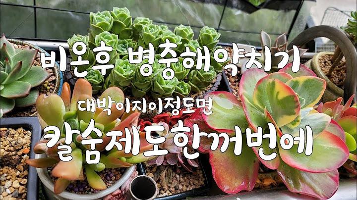 💥다육이키우기 살충제🐛 뿌려볼까유 Succulent多肉植物초보다육