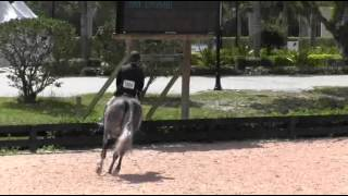Video of LUGANO ridden by CHRISTOPHER PAYNE from ShowNet!