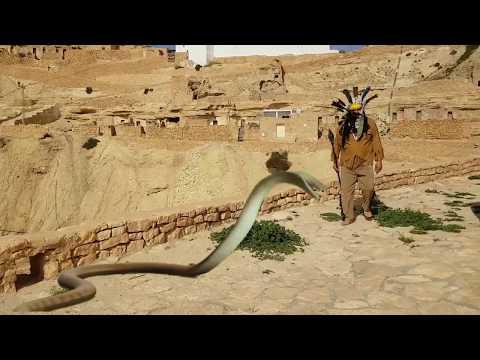 chenini tataouine le retour des dinosaures et des extraterrestres