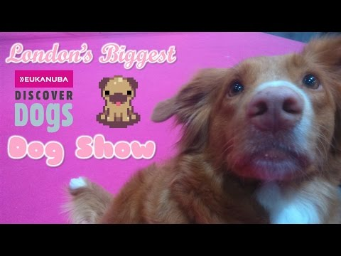 discover-dogs-2015:-london's-biggest-dog-show