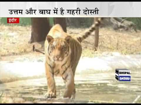 tiger of indore me as a voice artist in this video