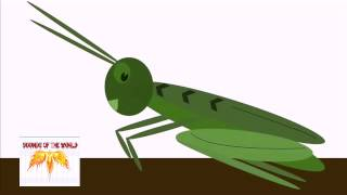 Crickets Chirping At Night - Sound Effects