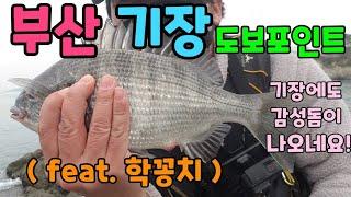 부산 기장 도보권 감성돔 낚시 학꽁치 포인트 소개