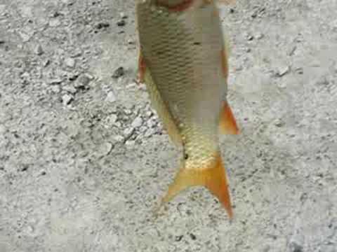fishing at rawal lake
