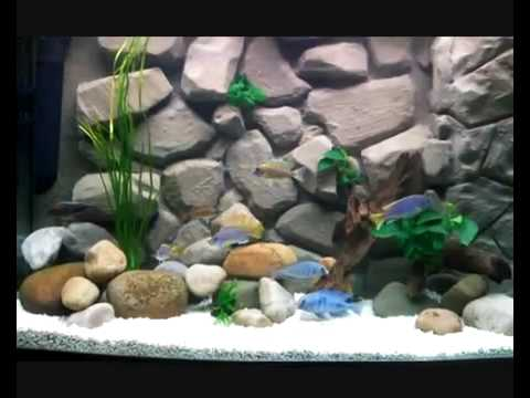Diy 3d Aquarium Background Youtube
