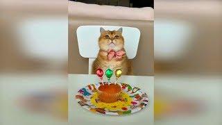 Смешные кошки и коты Октябрь 2019 Новые видео про кошек, приколы с котами funny cats 2019 #102