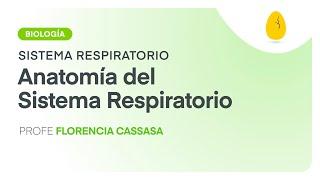 Anatomía del Sistema Respiratorio | Biología | Sistema Respiratorio | V2 | Egg Educación