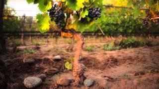 Trivento Eolo 2012 - Anniversary Harvest