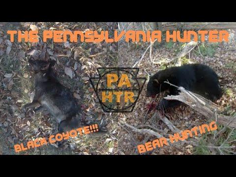 PA Black Bear Hunting/ Black Coyote Kill