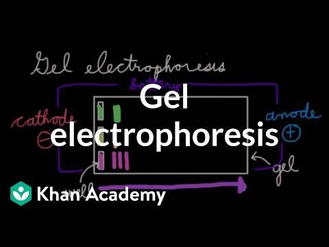 Gel electrophoresis   Chemical processes   MCAT   Khan Academy