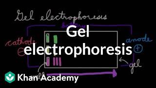 Gel electrophoresis | Chemical processes | MCAT | Khan Academy