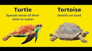 difference between frogs and toads