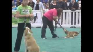 Pet Expo 2015-woofjocks tug of war