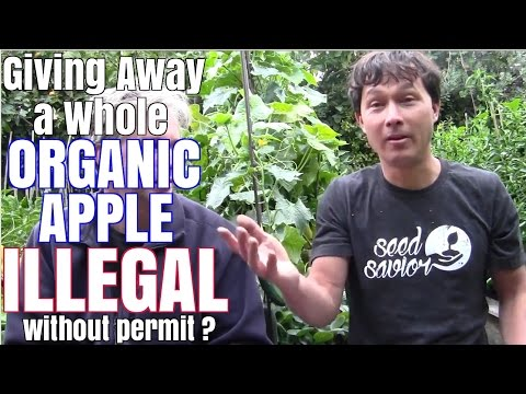 Giving Away a Whole Organic Apple ILLEGAL without permit ?