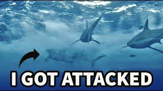 I GOT BIT BY A SHARK ON SHARK WEEK (JACKASS 4)