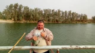صيد بلطي بالمكرونه بوادى مشقر بالمجمعة