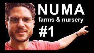 Numa Farms & Nursery #1