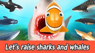 [EN] Let's raise sharks and whales! sharks and whales names for kids, coco animation ㅣCoCosToy