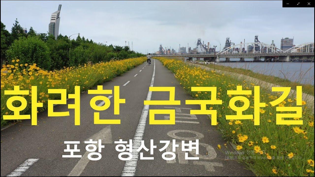 화려한 금국화 영상 기행 - 포항 형산강변  (colorful gold chrysanthemum Video Tour - Hyeongsan River in Pohang)